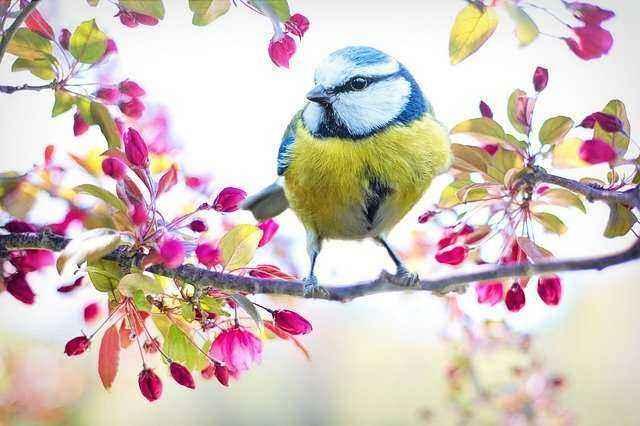 Πουλάκι σε κλαδί δέντρου