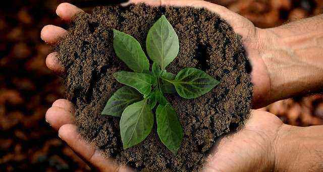 Χέρια με χώμα και φυτάριο