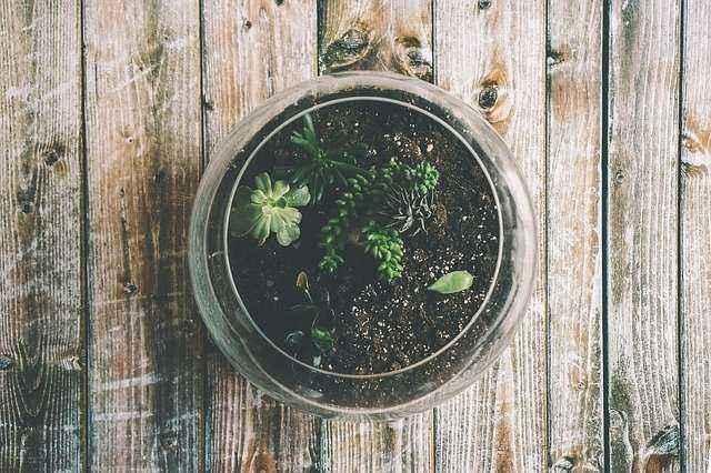 Μικρό terrarium σε ξύλινο πάγκο