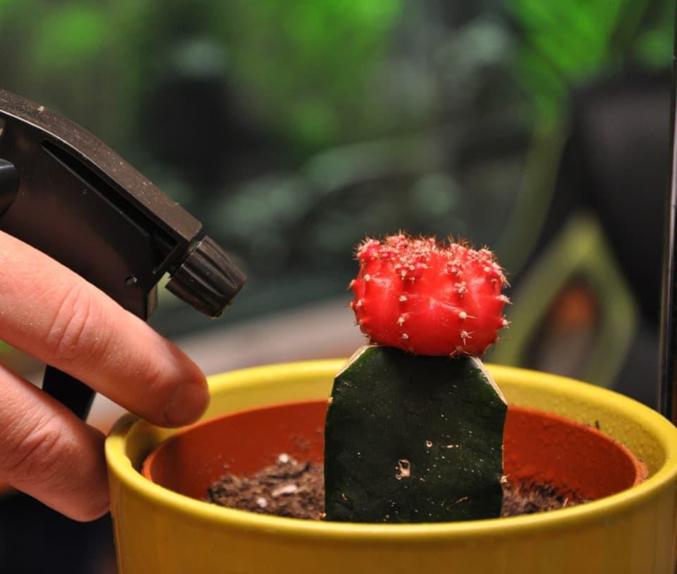 Ψέκασμα φυτού