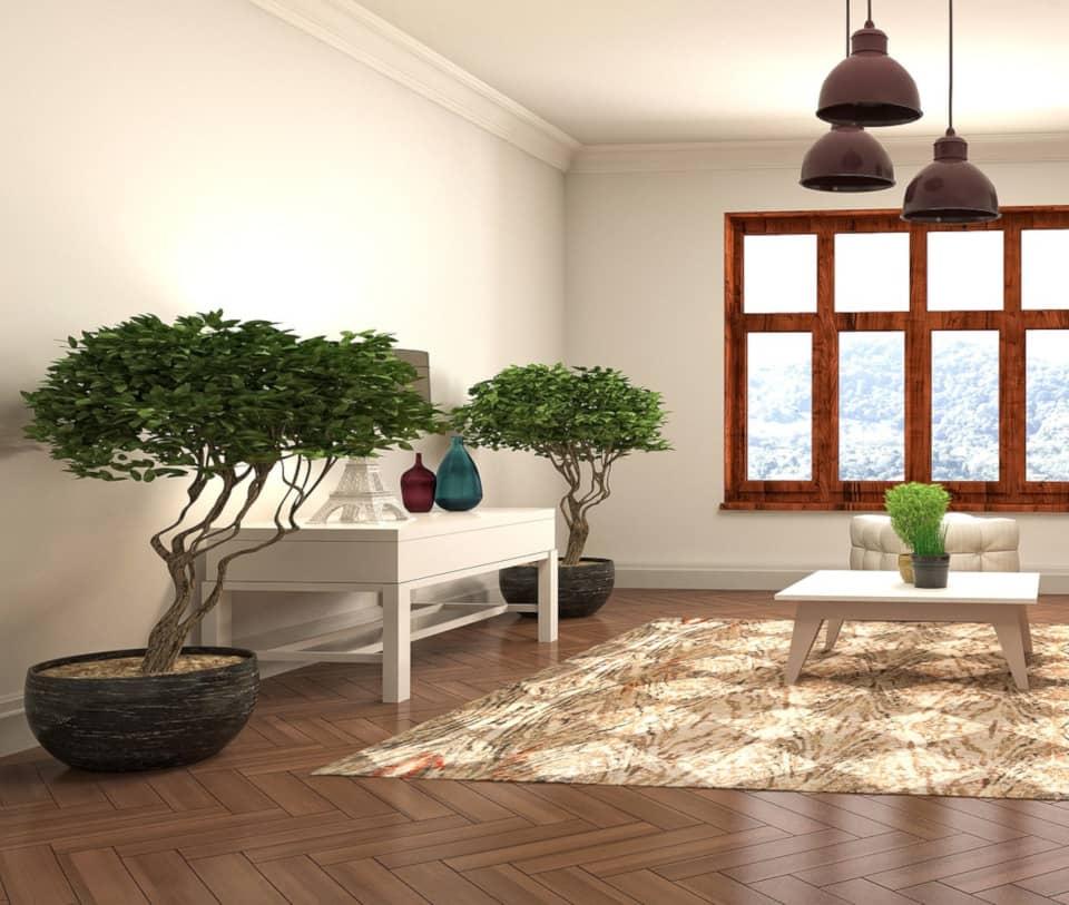 φυτά σε σαλόνι