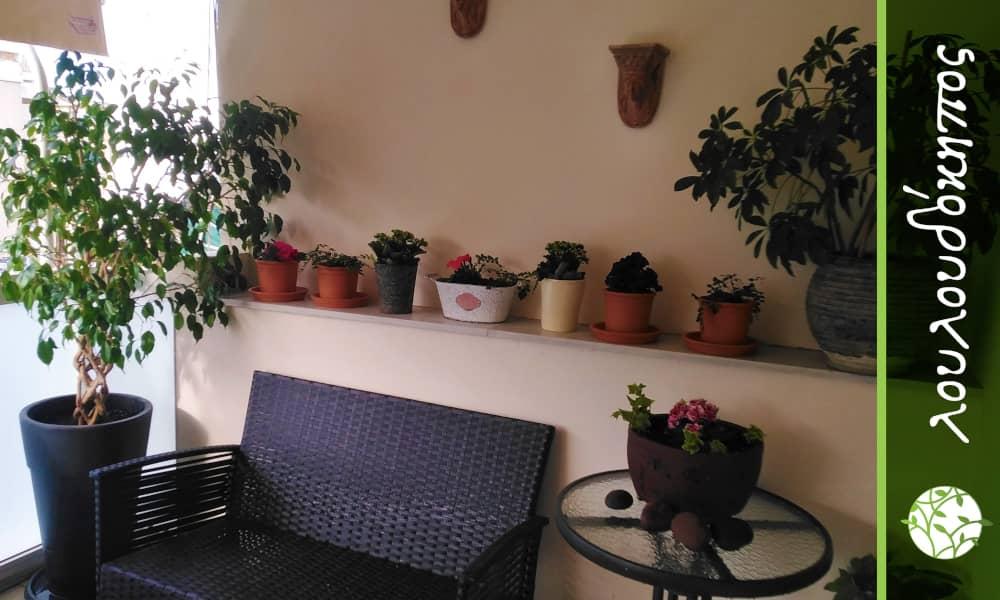 μικρά φυτά σε μπαλκόνι